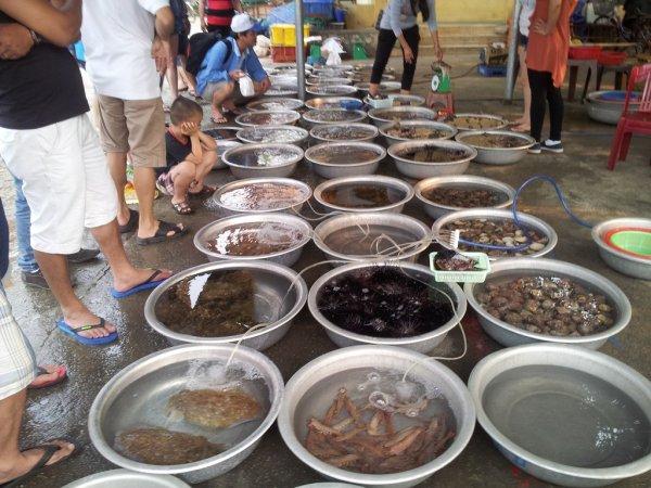 Tour Cù Lao Chàm hàng ngày ăn bãi Chồng